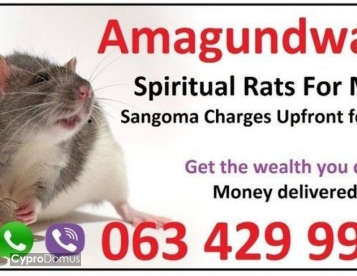 Best astrologer with spiritual rats for